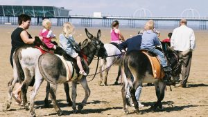 Southport Donkeys