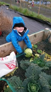 allotment harvest_n